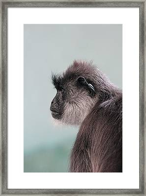 Framed Print featuring the photograph Gibbon Monkey Profile Portrait by Tracie Kaska