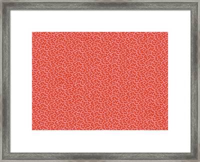 Gibweed Coral Framed Print