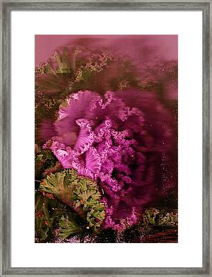Gift From The Garden Framed Print by Anne-Elizabeth Whiteway