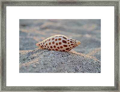 Gift From The Sea Framed Print