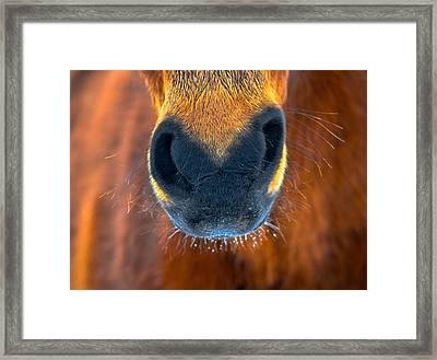 Gift Horse Framed Print by Brian Stevens
