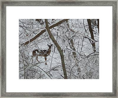 Gift In The Woods Framed Print