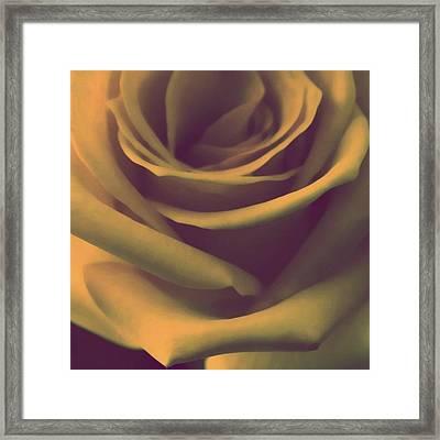 Gift Of Gold Framed Print