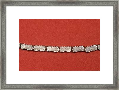 Gigli Saw Blade Framed Print by Science Photo Library