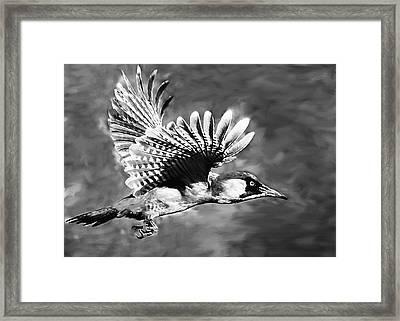 Gila Woodpecker Sedona Arizona Framed Print