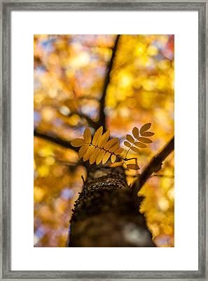 Gilded Framed Print by Aaron Aldrich