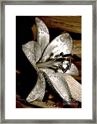 Gilded Lilies 3 Framed Print