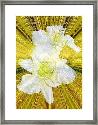 Gilding The Daylilies Framed Print by Susan Elizabeth Dalton