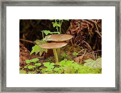 Gilled Mushroom On The Forest Floor Framed Print by Michael Qualls