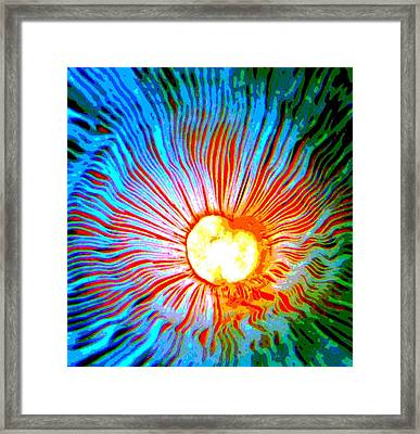 Framed Print featuring the photograph Gills by Deena Stoddard