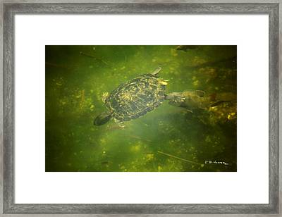 Framed Print featuring the photograph Gimme A Push Willya by R B Harper
