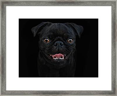 Gimme A Smile Framed Print by Joachim G Pinkawa