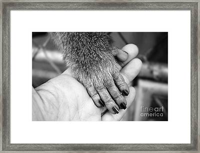 Gimme Five Framed Print by Michelle Meenawong