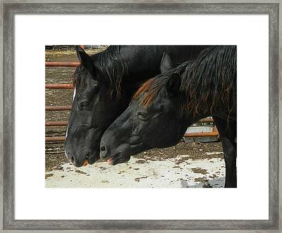Gimme That Apple Framed Print by Kathy Barney