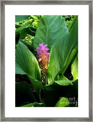 Ginger Blossom Framed Print