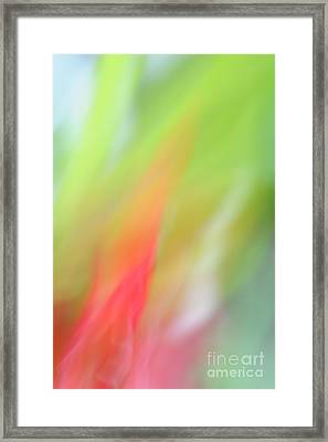 Ginger Flower Abstract 2 Framed Print by Catherine Lau