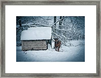 Ginger In Cream Framed Print by Nickaleen Neff