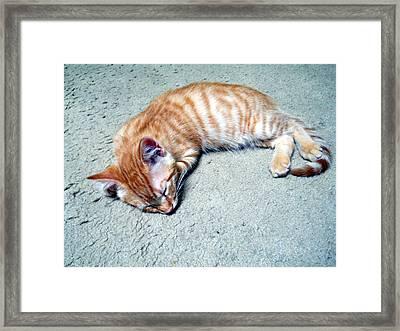 Ginger Sleeps Framed Print