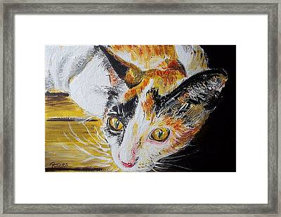 Ginger Stray Cat Framed Print