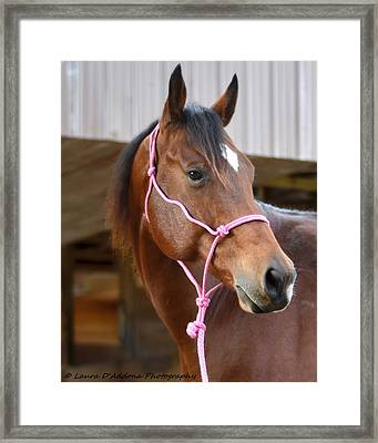 Gingers Beauty Framed Print by Laura DAddona