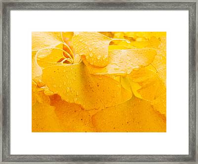 Framed Print featuring the photograph Ginkgo Biloba Leaves by Vizual Studio