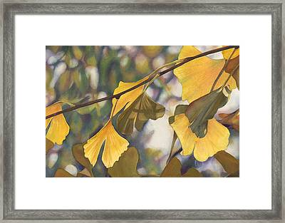 Ginkgo Gold Framed Print by Sandy  Haight