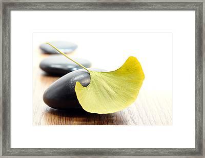 Ginkgo Leaf  Framed Print