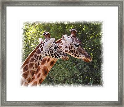 Framed Print featuring the photograph Giraffe 03 by Paul Gulliver