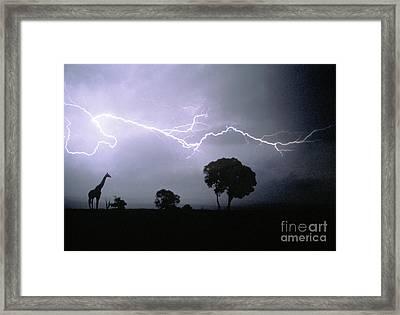 Giraffe And Lightning Framed Print by Mark Newman