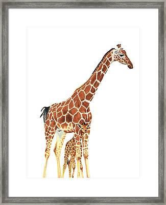 Giraffe Art - A Mother's Love - By Sharon Cummings Framed Print by Sharon Cummings