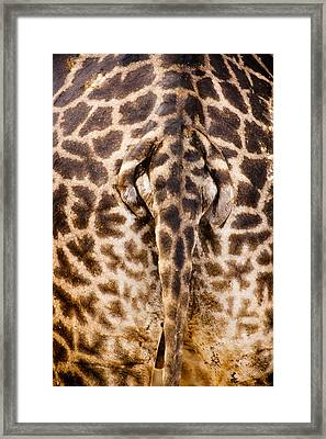 Giraffe Butt Framed Print by Adam Romanowicz