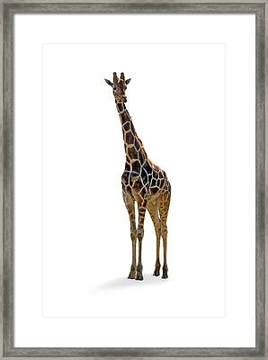 Framed Print featuring the photograph Giraffe by Charles Beeler