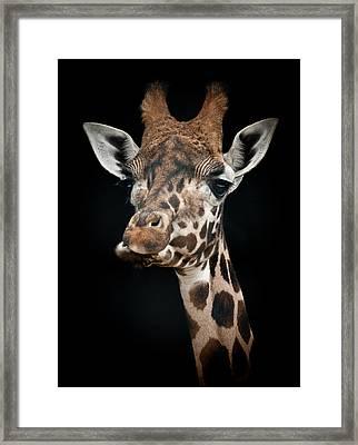 Giraffe Framed Print by Chris Boulton
