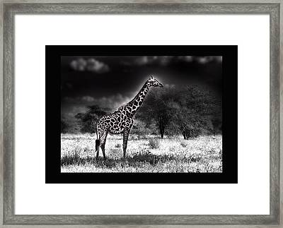 Giraffe Framed Print by Christine Sponchia