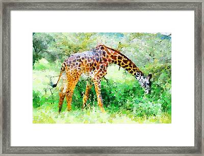 Giraffe Eating Grass Painting Framed Print by George Fedin and Magomed Magomedagaev