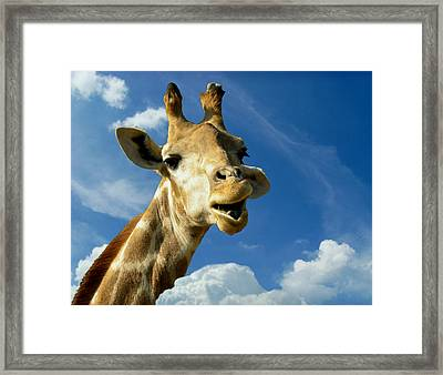 Giraffe Framed Print by Heike Hultsch