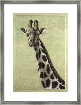 Giraffe Framed Print by James W Johnson