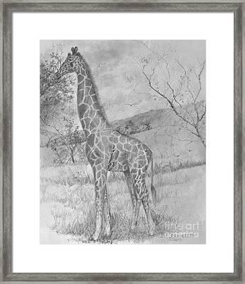 Giraffe Framed Print by Jim Hubbard