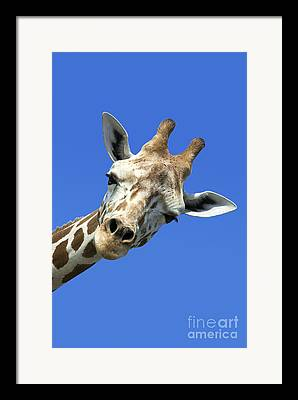 Feeding Photographs Framed Prints