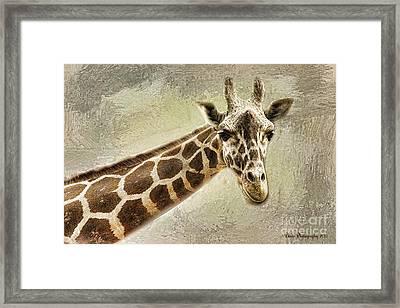 Giraffe Framed Print by Linda Blair