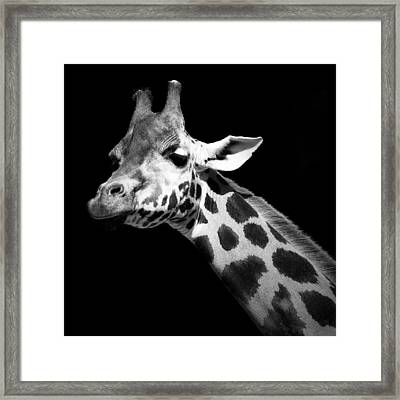 Portrait Of Giraffe In Black And White Framed Print