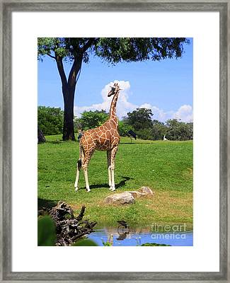 Framed Print featuring the photograph Giraffe On A Spring Day by Jeanne Forsythe