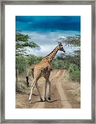 Giraffe On The Road Framed Print by Mesha Zelkovich