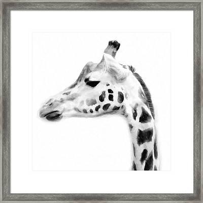 Giraffe On White Background Framed Print