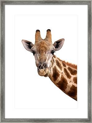 Giraffe Portrait Framed Print by Johan Swanepoel