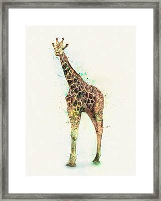 Giraffe Study Framed Print by Taylan Apukovska
