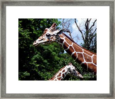 Framed Print featuring the photograph Giraffes Coming And Going by Tom Brickhouse