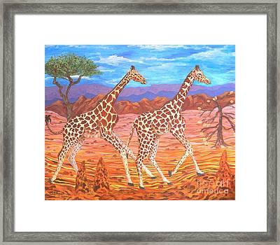 Giraffe's Courting Framed Print by Caroline Street
