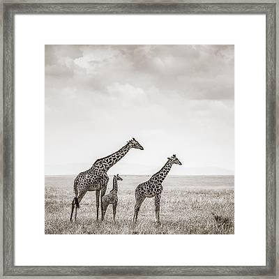 Giraffes Masai Mara Kenya Framed Print by Regina Mueller
