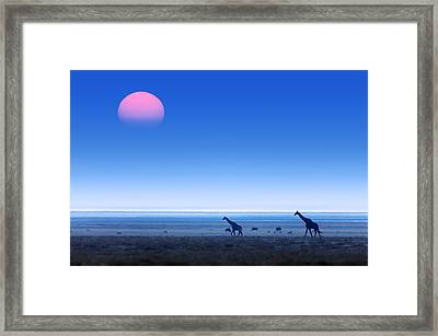 Giraffes On Salt Pans Of Etosha Framed Print by Johan Swanepoel